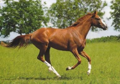 Pohledy koní
