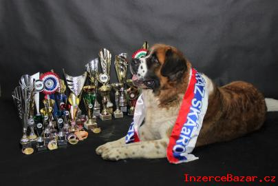 Moskevský strážní pes s PP-Fci