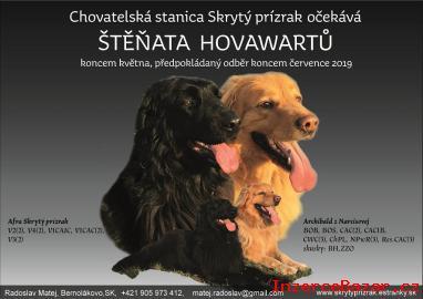 Hovawart - štěňata
