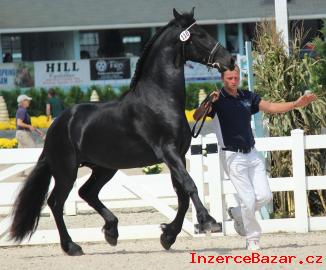 energetické fríských koní
