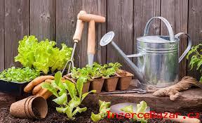 Záhradník- Holandsko (1500-1700€/mesiac/