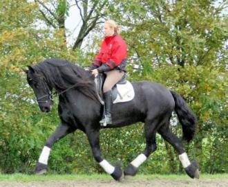 fantastické vrstev fríské koně