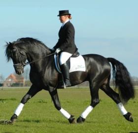 Fantastický Fríský kůň